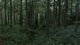 image of trees and ferns in an old growth forest in British Columbia