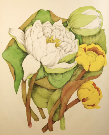"Agnes Fitzgibbon (1833-1913), ""Nymphaea Odorata and Nuphar Advena"" from Canadian Wild Flowers, John Lovell, 1868. Gift of Larry Pfaff in memory of Janet E. Hutchison, 2017"