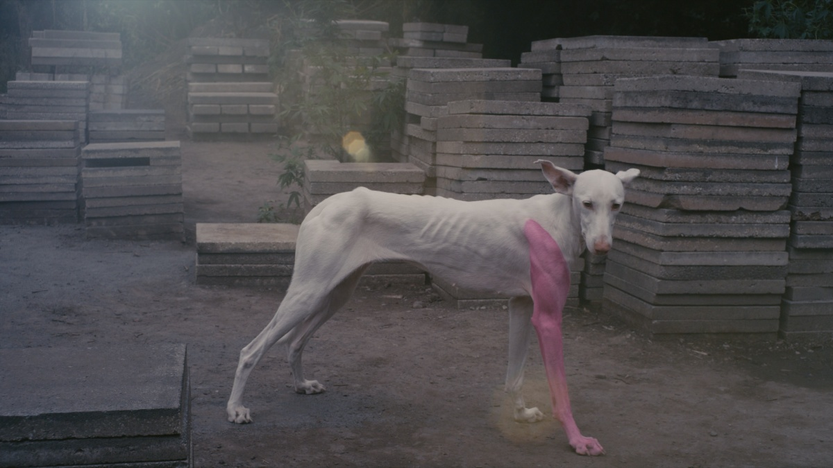 Pierre Huyghe. Film still from A Way in Untilled