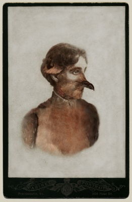 Photo of Sara Angelucci, Aviary (Female Passenger Pigeon/extinct)