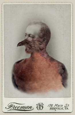 Photo of Sara Angelucci, Aviary (Male Passenger Pigeon/extinct)