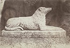 William Henry Fox Talbot, Sir Walter Scott's favorite dog, Maida (detail), 1845